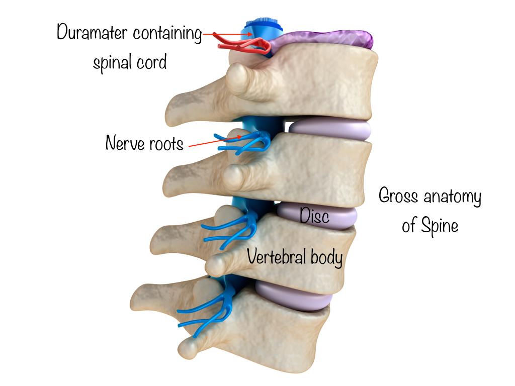 Spinal tumour symptoms