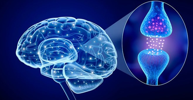 Neurotransmisores – Neurotropy™