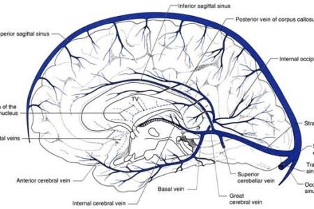 Interior Inferior Sagittal Sinus Consists Of Full Hd Maps