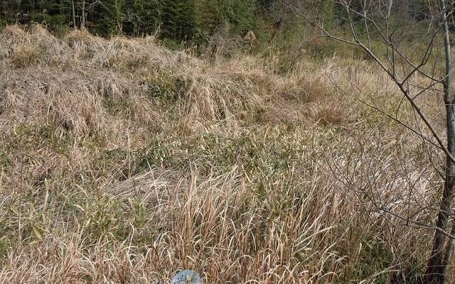 山の草、多し