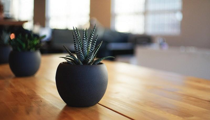 Make schools greener with indoor plants