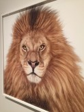 African Lion 180 by Andrew Zuckerman. Archival pigment print. Photo by Anna Critchley.