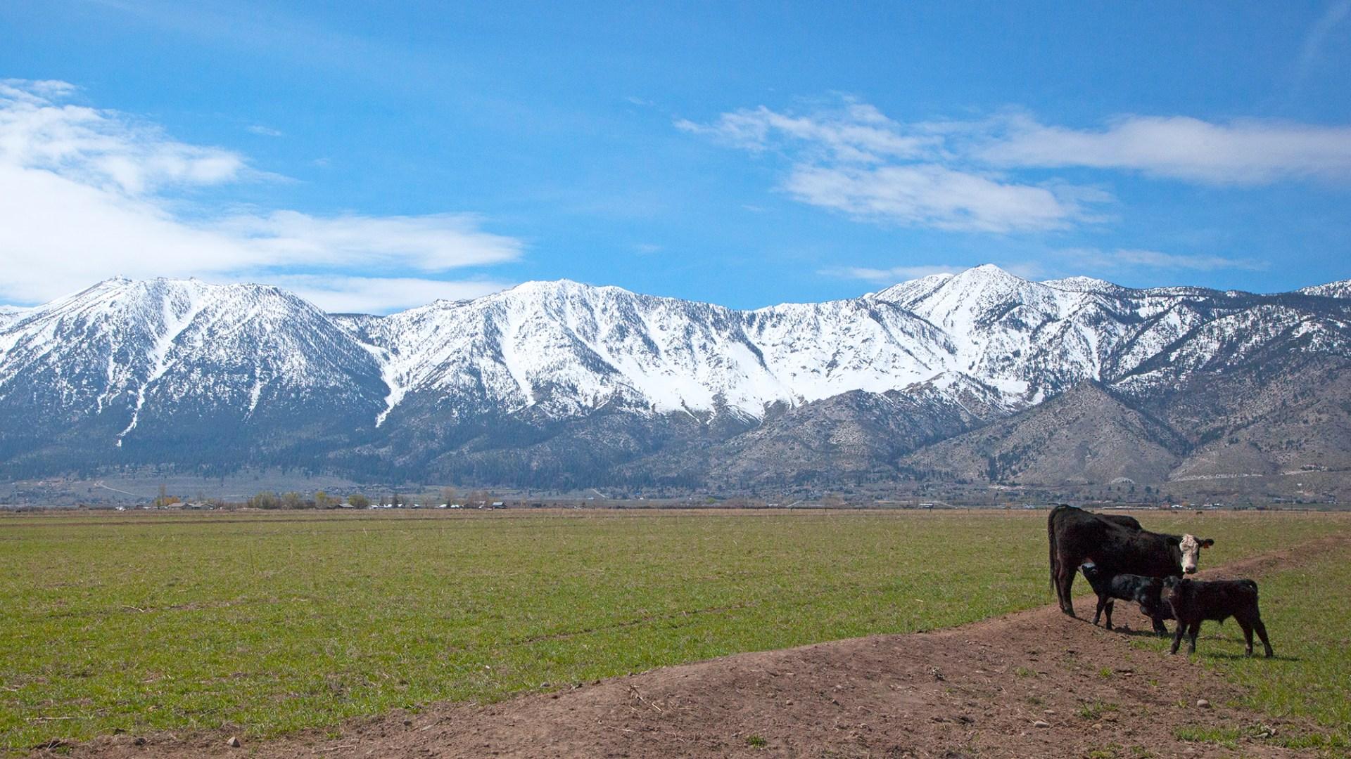 Minden's Dangberg Ranch.