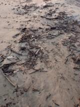 Trash in tide-line on Zihuatanejo beach