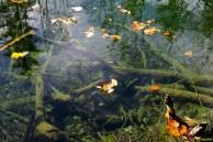 Prozirno jezero