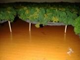 model woods for AoF (2)
