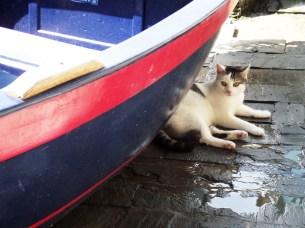 Riomaggiore hidden cat