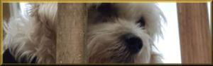 Dog on the lanai