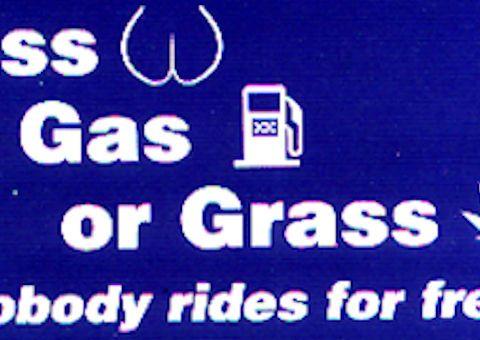 Cash Grass or Ass sticker