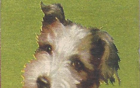 Dog on a matchbook advertising radio service and repair