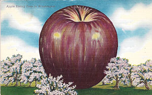 GIANT eastern washington apple