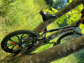 Bicycle in tree
