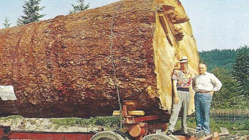 Log for toothpicks