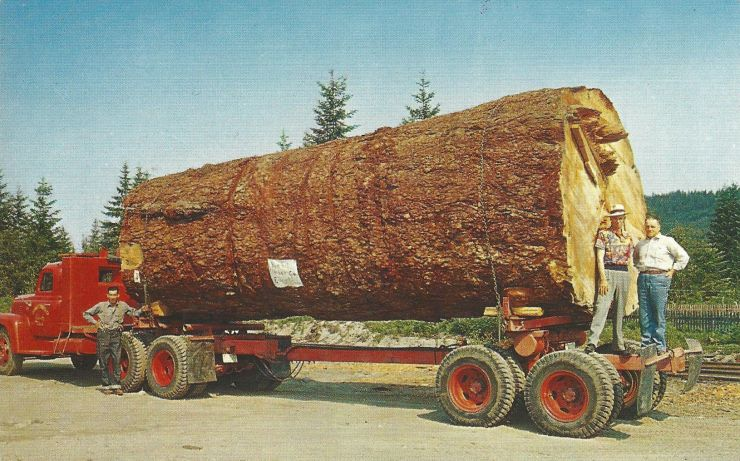 This isn't firewood, it's 70 years of toothpick raw materials.