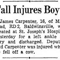 Boy falls off cow