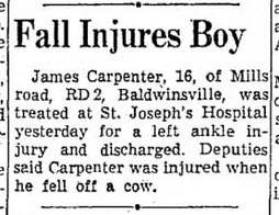 Newspaper article about boy falling off cow