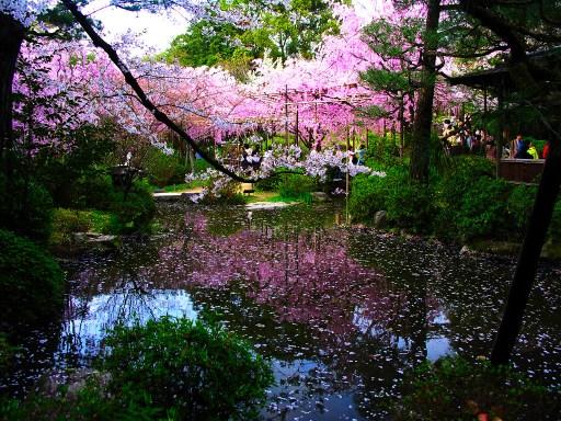 japanese-garden5