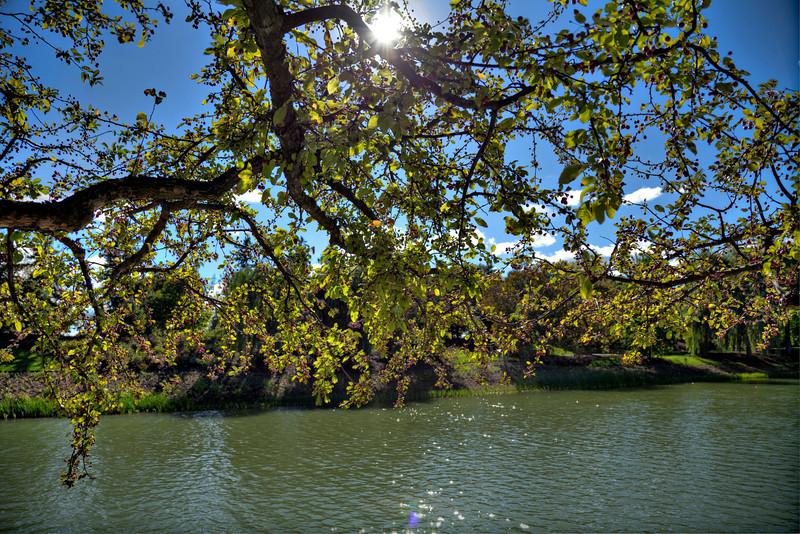 Botanic river garden