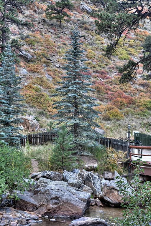 Bob Ross Colorado spruce