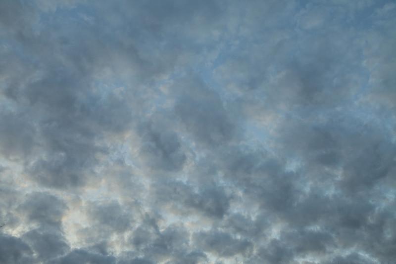 Gray-masked dusk