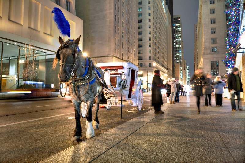 Horse & carriage & concrete & traffic