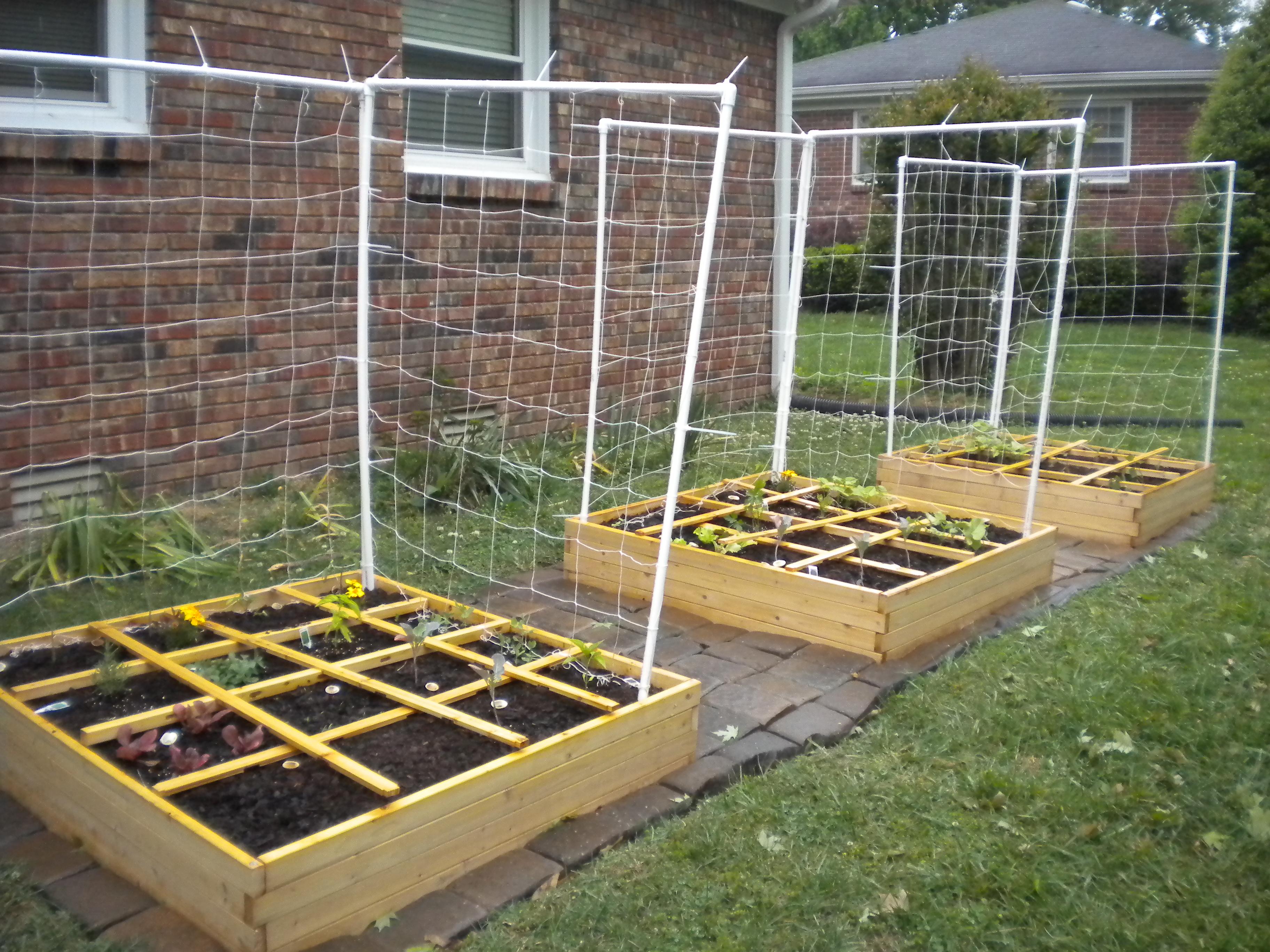 Square Foot Garden Update 1