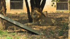 Kanan Pendari Zoo Bilaspur