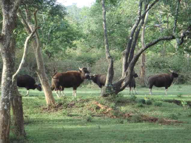 Achanakmar Wildlife Sanctuary Bilaspur