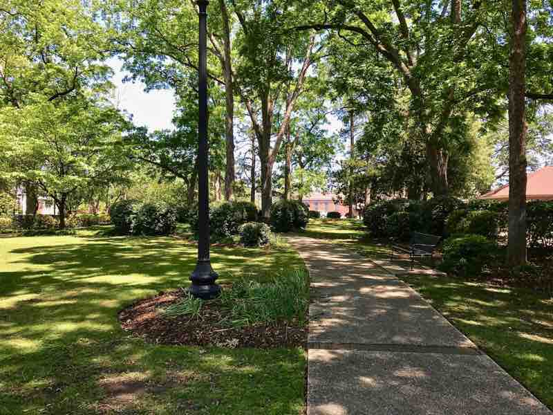Tree lined walkway - University of Alabama | nevertooldtotravel.com | Gary House