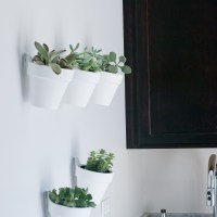 DIY: White Terra-Cotta Pots with Succulents