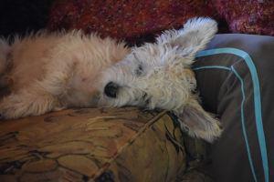 emmett_napping