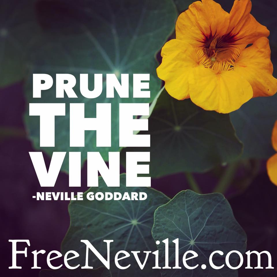 prune the vine