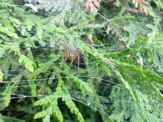 Spiderblogging: Love Hurts