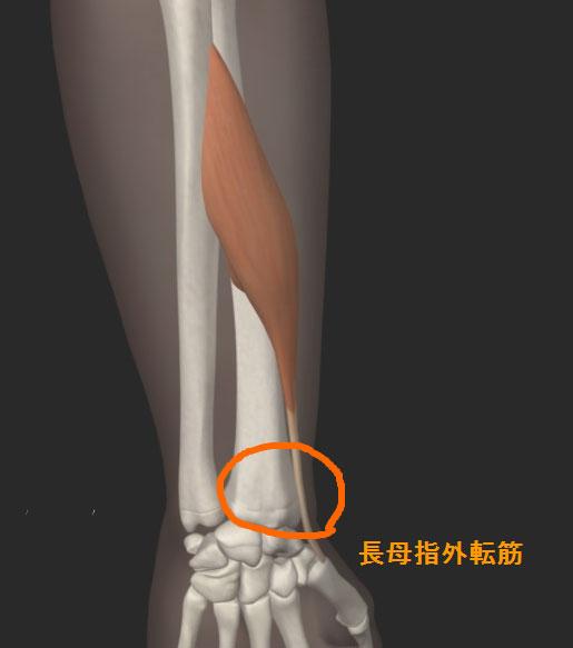 腱鞘炎(ドケルバン病)長母指外転筋