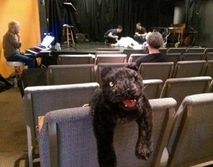 Rufus the cat - unsung star of Re-Animator: The Musical
