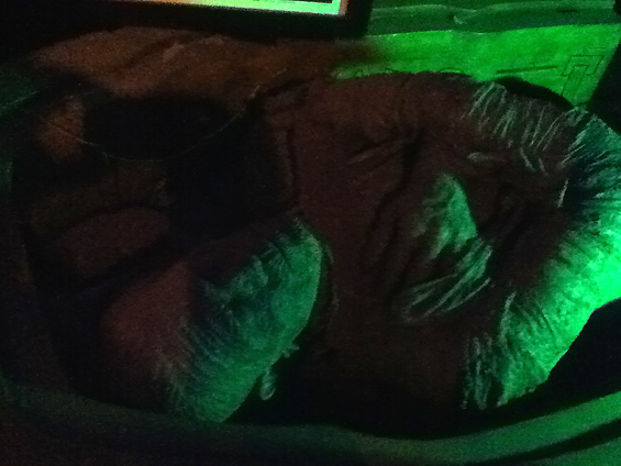 The Hollywood Musuem Dungeon of Doom: The Mummy in Sarcophagus