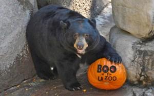 Boo at the Zoo bear