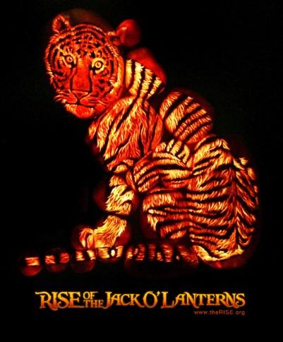 tiger PR LOGO