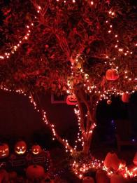 gothic-hills-2016-pumpkins-in-trees