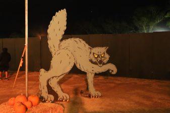 Nights of the Jack Halloween 2019 cat