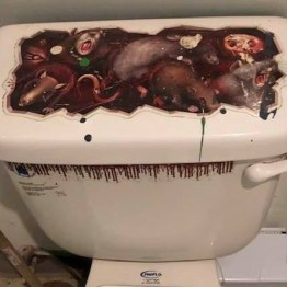 Even the toilet is scary.