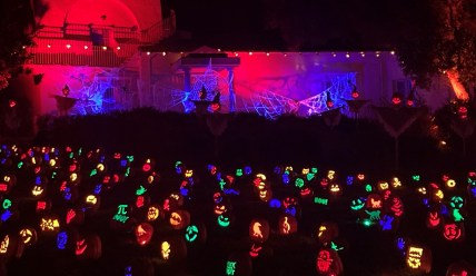 Field of Jack O'Lanterns