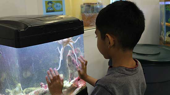 Student observes in awe a first encounter with an octopus