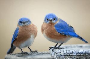 ツイッターアフィリエイトをやっていてアカウントロックの原因と解除方法