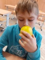 jablko (20)