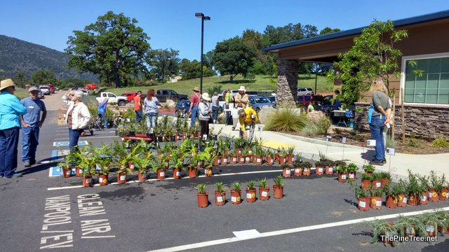 Native Plant Society Held A Native Plant Sale And Information Day At CCWD Headquarters