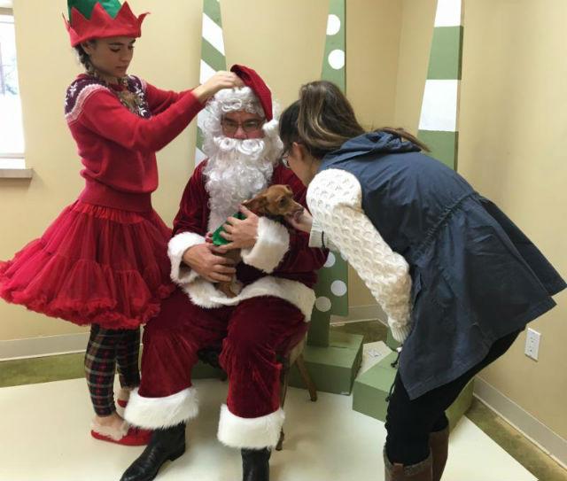 Calaveras Humane Society's Holly Jolly Holiday Kickoff