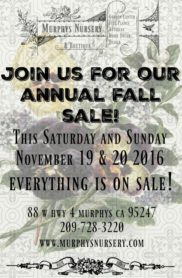 Stop In At The Murphys Nursery Annual Fall Sale!