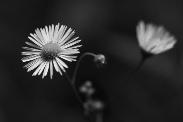 Flora -1-