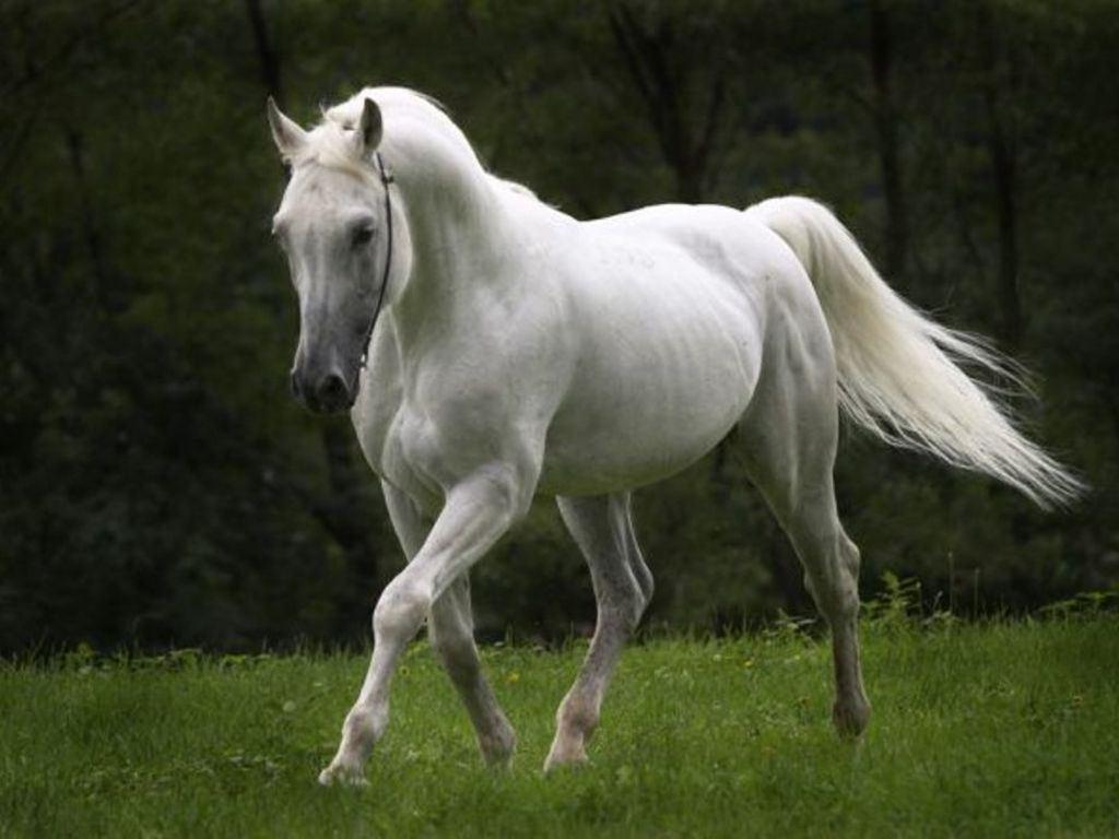 صور حصان اجمل حصان فى العالم صبايا كيوت